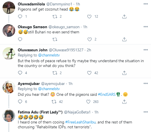 VIDEO: Nigerians React As Buhari's Pigeon Refused To Fly At Armed Forces Remembrance Day Celebration - Vantage News Nigeria